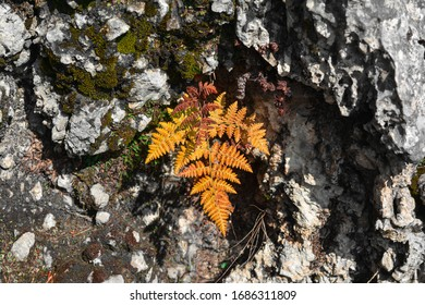 greenish brown leaves on the rock