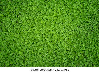 A  greenish cleaver natural background