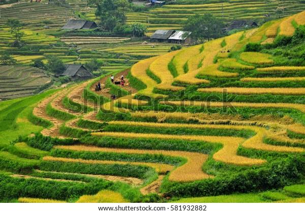Greenish rice fields landscape in the mountain of Sapa, Vietnam