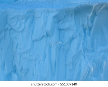 Greenland. Centuries-old thicknesses of glaciers with bird flying over icebergs. Research of a phenomenon of global warming