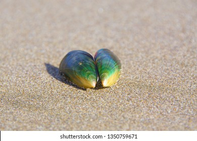 Green-lipped mussel, perna canaliculus, new zealand