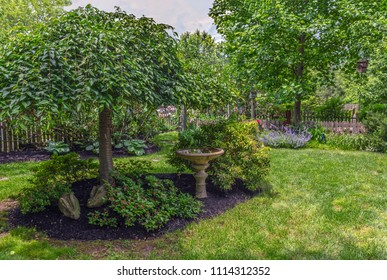 The greens of Summer in this backyard garden in crntral New Jersey.