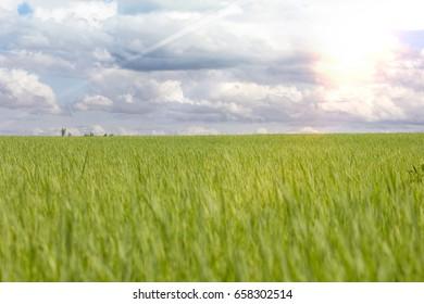 greensward and bright sky
