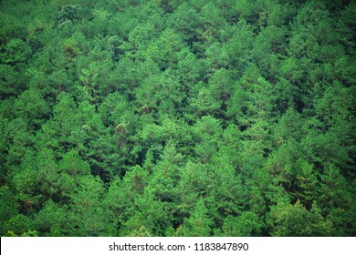 Greentrees texture art background premium from mountain Thailand