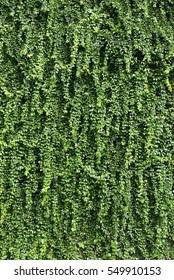 Greenwall Images Stock Photos Vectors Shutterstock