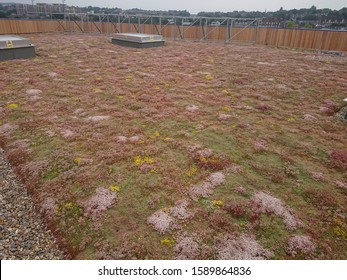 Greenwich, London / United Kingdom - June 23, 2018 : a view of the newly opened green roof of Ikea Greenwich store, featuring sedums and other succulent plants
