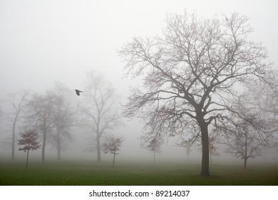 Greenwich Park in a Mist