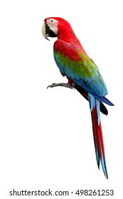 Green-winged Macaw parrot, beautiful multi-colors birds with red, blue and green isolated on white background, magnificent creature