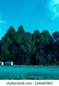 greeny  pine tree forest bank of transpor road  and blue sky background