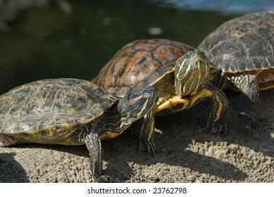 greet turtles in the sun
