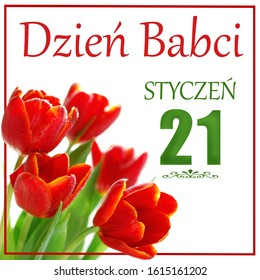 greeting card with bunch of red tulips and text in polish language Grandma Day January 21th