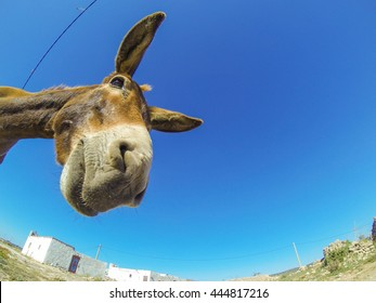 Greeting card with the funny donkey in desert of Morocco