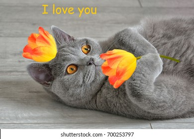 Greeting Card I Love You With A British Short Hair Cat That