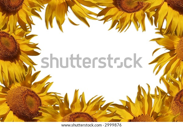 Greeting card surrounded by sunflowers, add your own text.