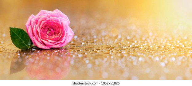 Greeting card or web banner idea with soft pink rose flower