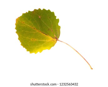 Gren and yellow asp leaves on white background