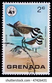 GRENADA - CIRCA 1977: A stamp printed in Grenada shows Killder - Charadrius vociferus, circa 1977