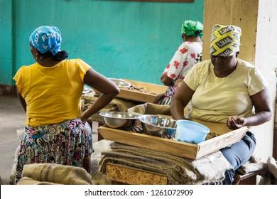 GRENADA ISLAND ANTILLES ON DECEMBER 2017: Women working at nutmeg factory.