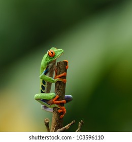 Grenouille Costa Rica 1000+ costa rica adventure pictures | royalty free images, stock