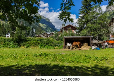 Gressoney Saint-Jean, Aosta Valley, Italy - August 13, 2013. A mare and her foal in their enclosure in a mountain village. In the background, Monte Rosa massif.