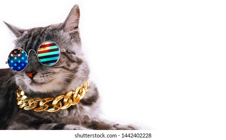 Grey American short hair cat face with American flag glasses and gold necklace. Copy space text.