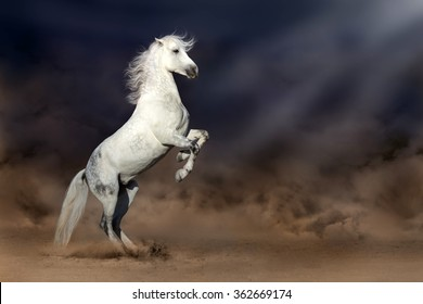 Grey andalusian horse rearing up in desert storm