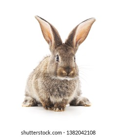 Grey baby rabbit  isolated on a white background.