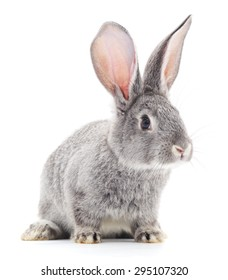 Grey baby rabbit on a white background.