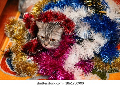 Grey beautiful striped cat in Christmas tinsel.