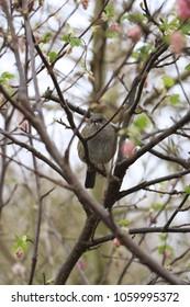 A grey bird sitting in a tree