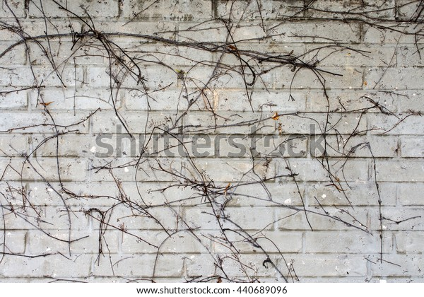 grey brick wall with withered ivy for background or texture