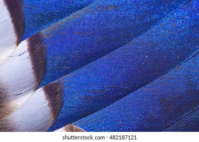 Grey, brown, blue, and white feathers on the wing of a wild duck as a background. Colorful feathers, bird feathers background texture. Selective focus.