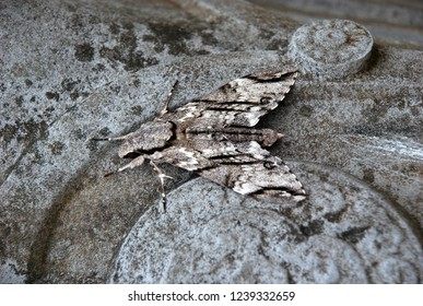 Grey butterfly moth on the ancient grey carved stone, mimicry