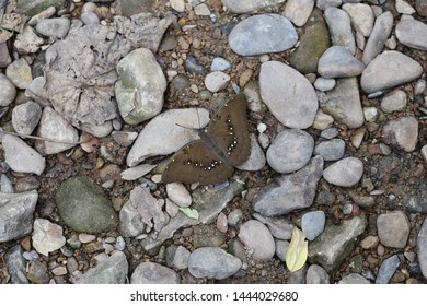 grey butterfly stand on the ground