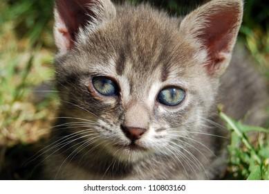 The Grey Cat 009