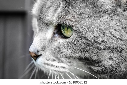 grey cat with bright green eyes