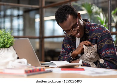 Grey cat. Cute grey cat distracting an african american office worker from work