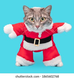 Grey cat in a funny Santa Claus costume isolated on a blue background. Concept of clothing for Pets at new year and Christmas time