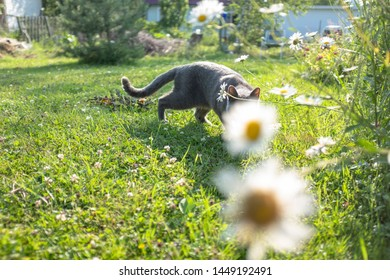 a grey cat in a garden playing hide-and-seek