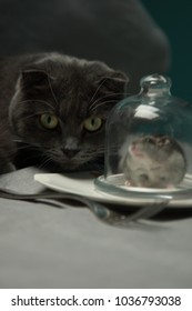 grey cat and hamster