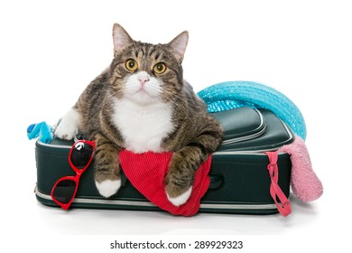 Grey cat lay on a suitcase full assembled for a holiday trip, isolated on white