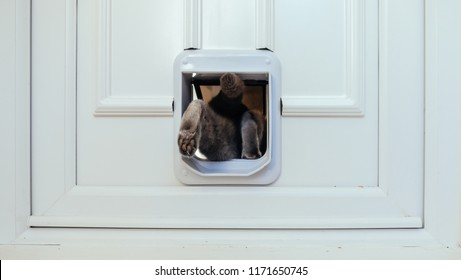 Grey cat leaving the house through cat flap