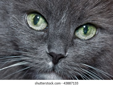 grey cat  look