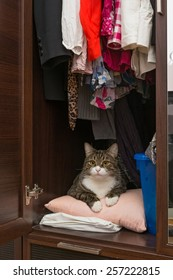 Grey cat lying in the cupboard for clothes