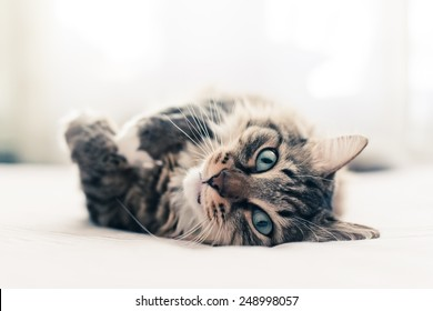 Grey cat lying on bed