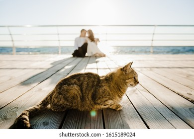 Grey cat on the wharf on the foreground and a silhouette of a couple on the background on a beautiful sunny day