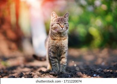 Portrait de chat gris. Chat dans le jardin