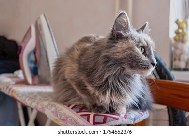grey-cat-rests-on-ironing-260nw-17546623