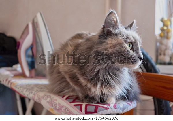 A grey cat rests on an ironing board and looking away, and in the background you can see an iron.