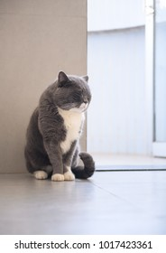 Grey cat, shot indoors